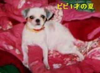 bibi_20061207_2
