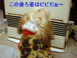 bibi_20070126_1