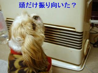 bibi_20070126_2