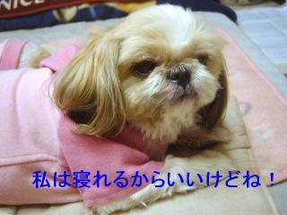 bibi_20070127_1