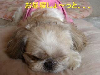 love_20070128_4