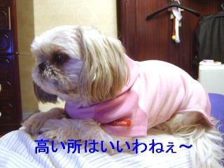 love_20070129_3