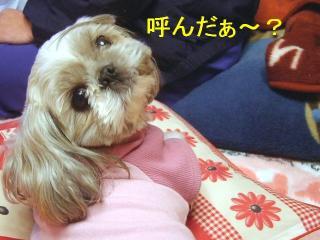 love_20070130_2