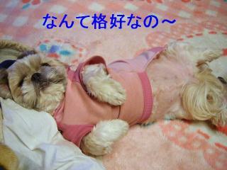 love_20070131_1