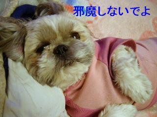 love_20070131_3