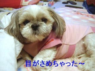 love_20070131_4
