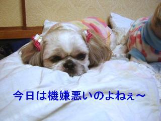 love_20070218_2