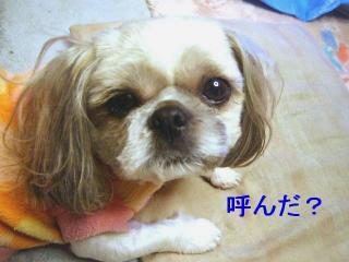 love_20070220_1