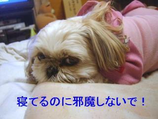 mint_20070130_1