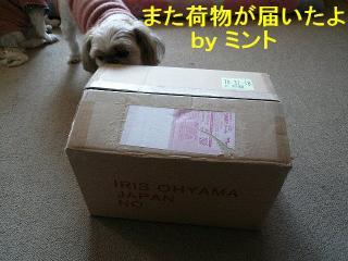 present_20080102_1