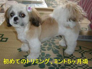 mint_20061206_1