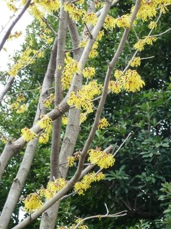 錦糸卵の木