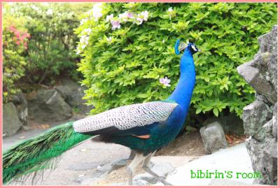 IMG_1334-1_convert_20110627004538.jpg