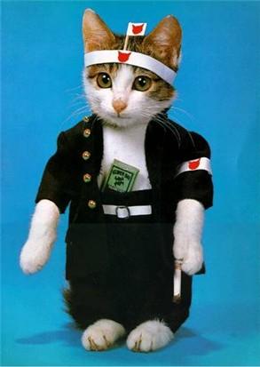 「なめ猫」