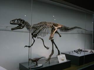 dinosaur フクイラプトル