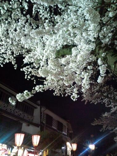 (夜桜)220409-4