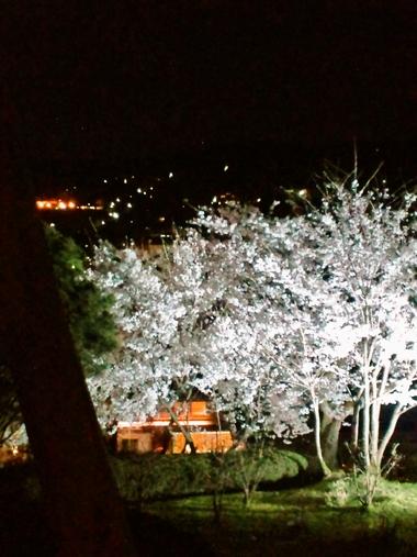 (夜桜)220409-1