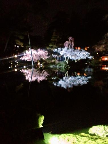 (夜桜)220409-2