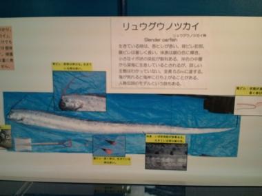 魚津水族館1