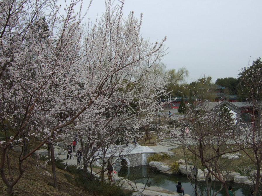 中山公園花
