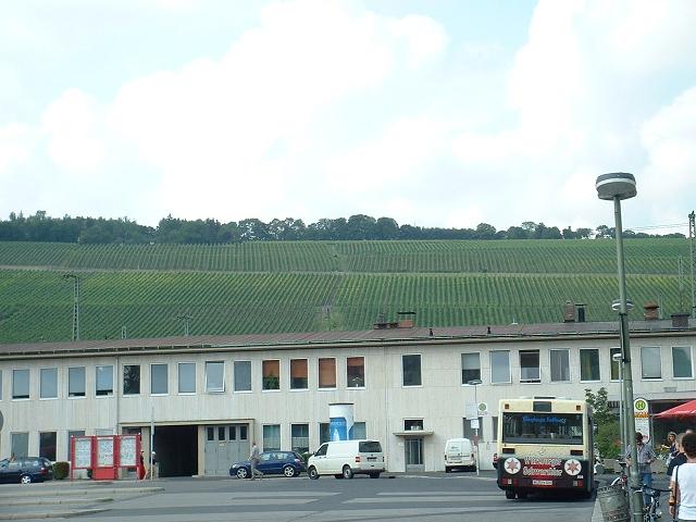 駅裏のブドウ畑