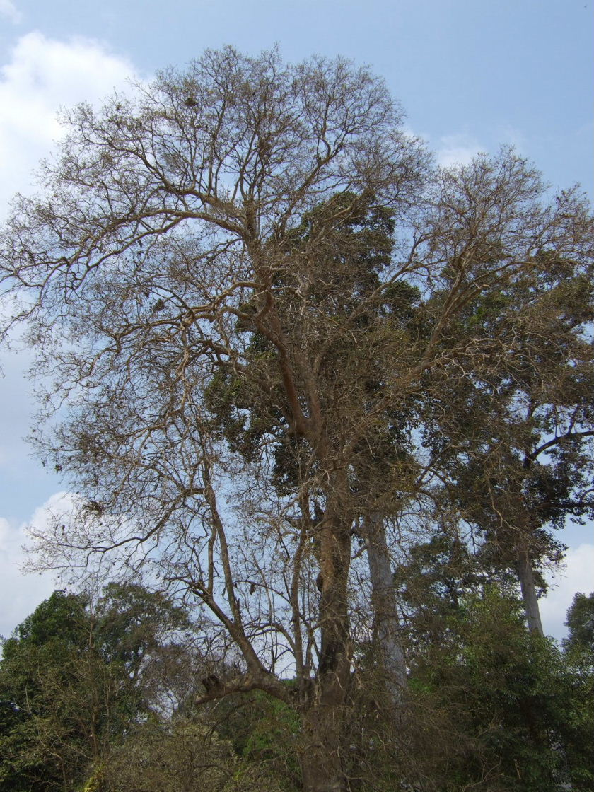 ATスライの木