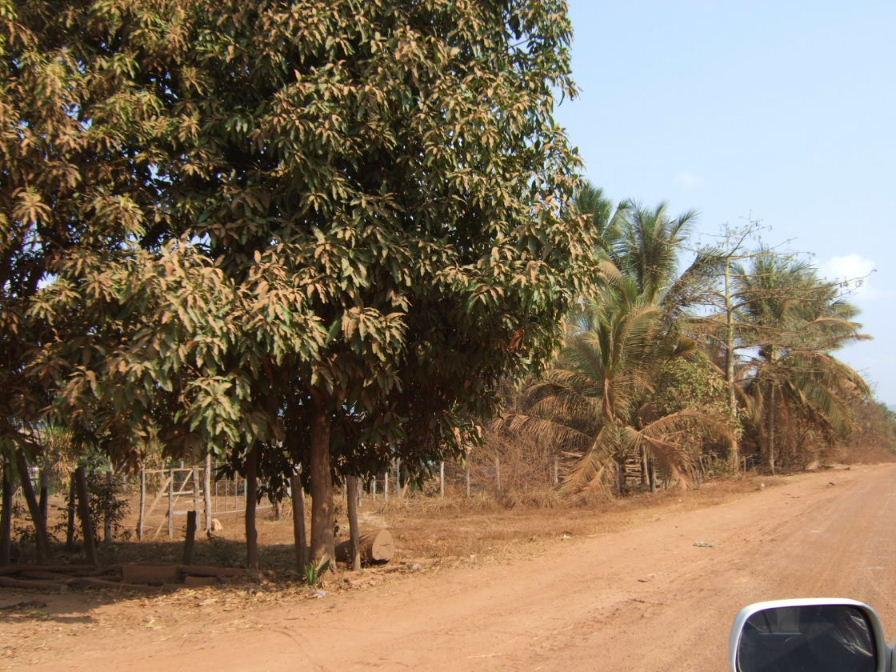 アンコール田舎道