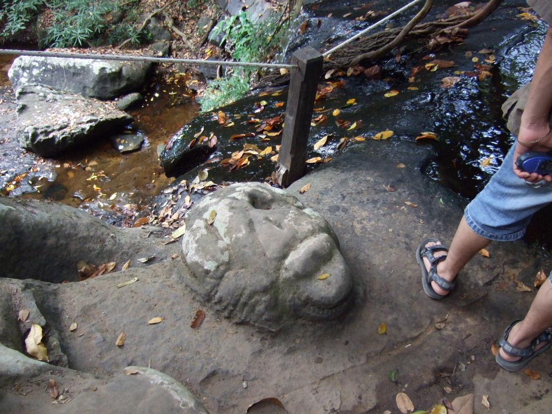 滝上のカエル