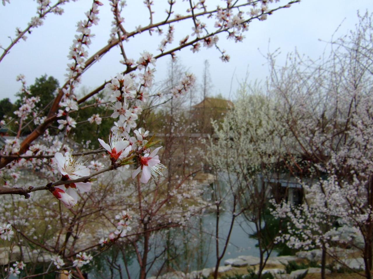 中山公園花アップ