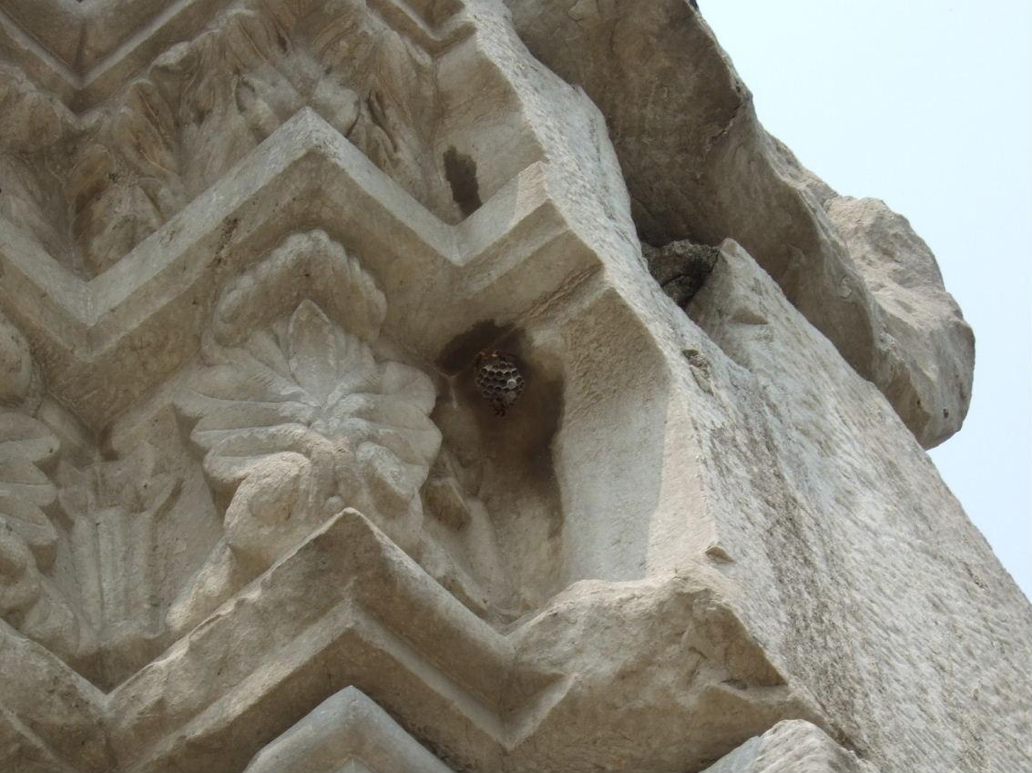 円明園蜂の巣