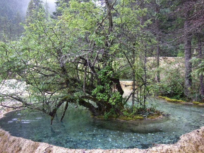 黄龍登り道池の中の木