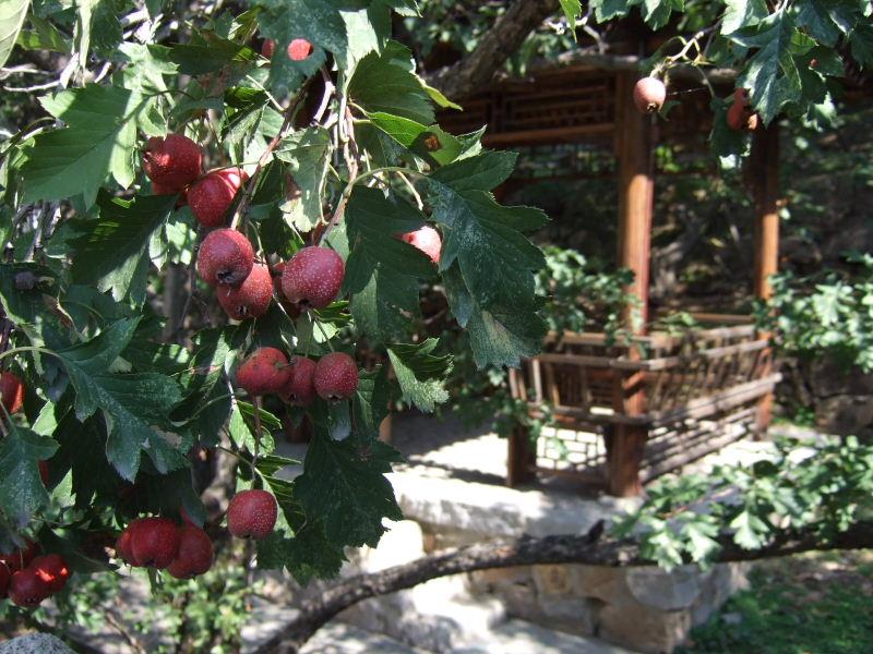 新紅資別荘ヒメリンゴ