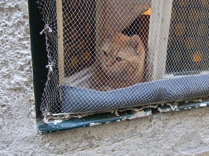 147Lisboaアルファマ猫