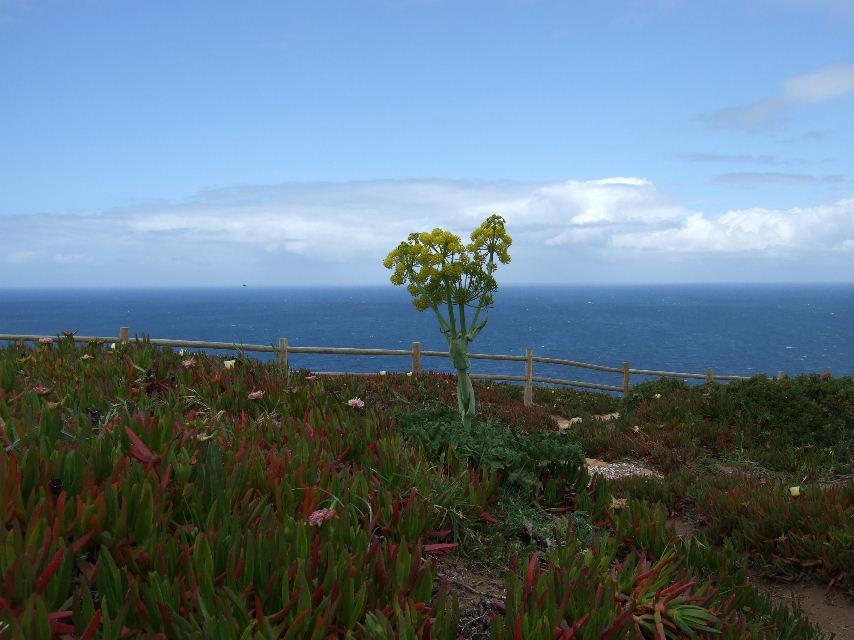 091Roca岬の花