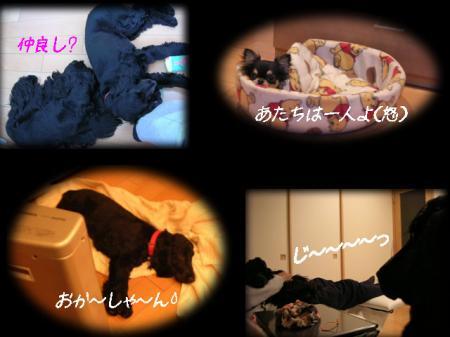 2006-2-8.jpg