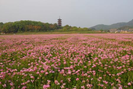 kokubunji_0428_2.jpg
