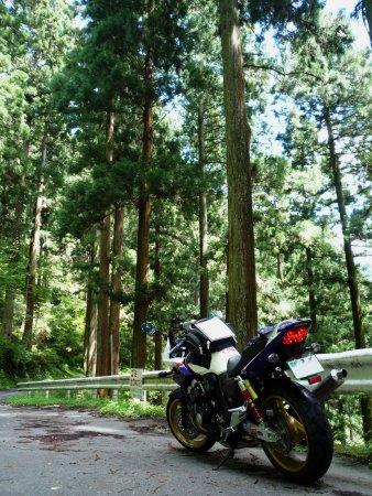 吉野杉の林を行く
