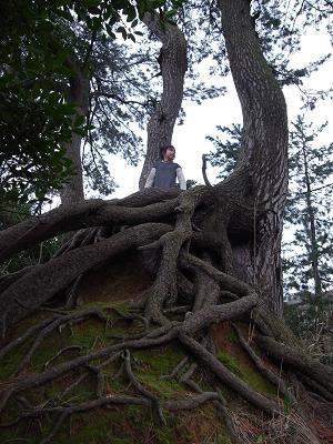 しろやま木