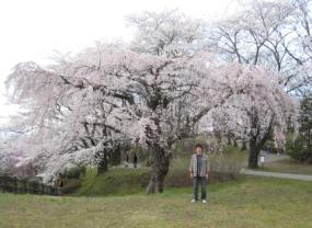2010桜6