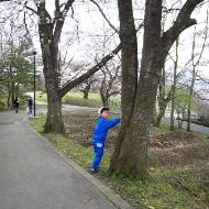 2010桜3