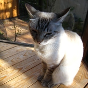 2010猫4