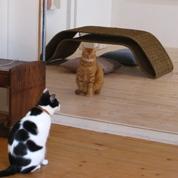 2010猫5