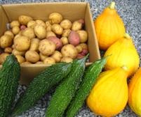 2010収穫