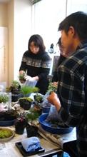 2010冬苔②