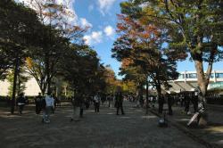 061115_代々木公園