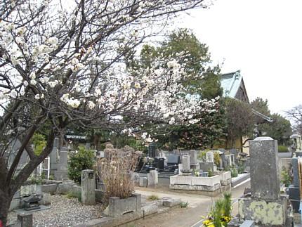 2009011803.jpg