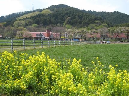 2009041306.jpg