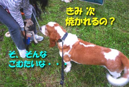 09_shimabbq08.jpg
