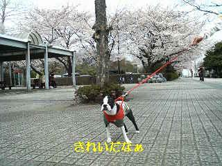 20090405_桜_文字.JPG