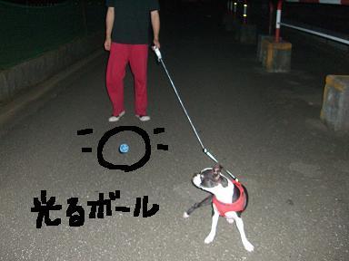 20090729CIMG3252.jpg